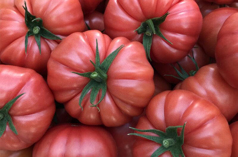 Cassarosa tomato Agroponiente