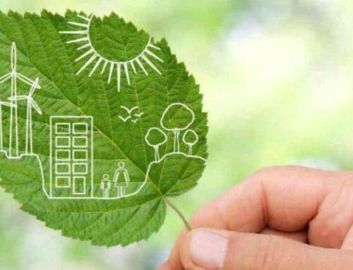 Recibimos de nuevo el Certificado de Sostenibilidad que concede la empresa IFCO