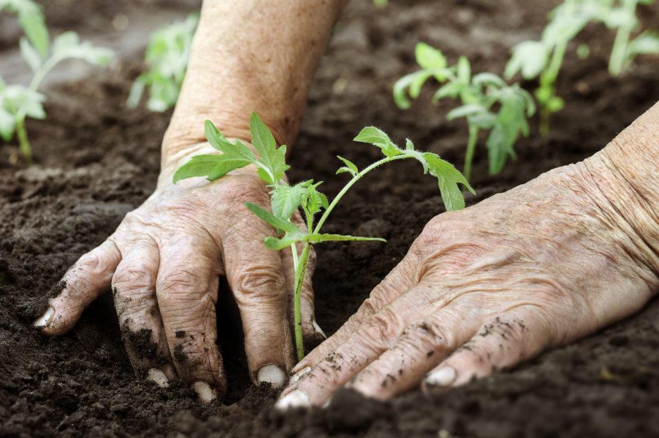 Transparencia y medio ambiente Agroponiente
