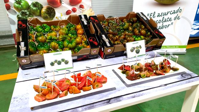 Vegacañada, escenario de una cata-degustación de los tomates de sabor Coulant y Chamán de Filosem