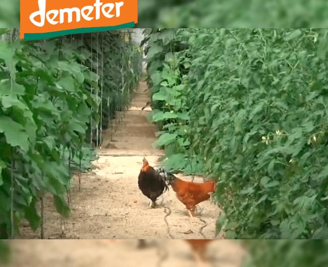 Grupo Agroponiente comienza a comercializar producto Demeter