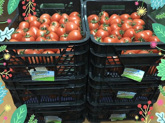 Alumnos del CEIP Indalo celebran el Día de Andalucía con nuestros tomates