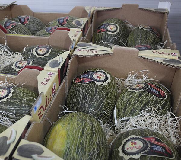 """Antonio Ortiz: """"Se espera una campaña de melón y sandía de mucha producción"""" y resalta """"nuestras novedades, como la sandía Kisy y el melón blanco"""""""