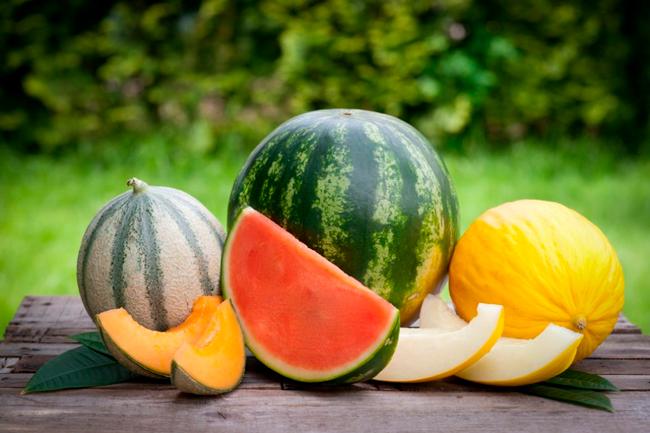 Variedades de primavera recomendadas: melón y sandía