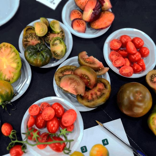 Colaboramos en la degustación de tomates de sabor de Almería 2019